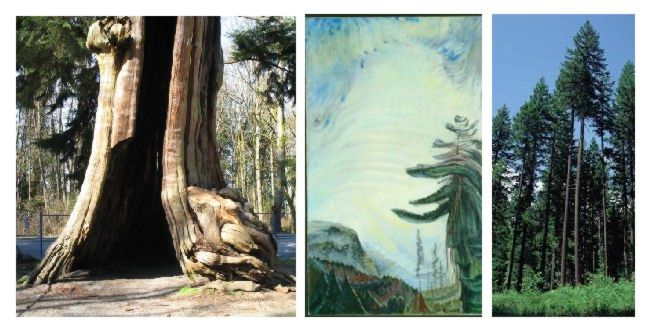 3_Stanley_Park_trees_ref